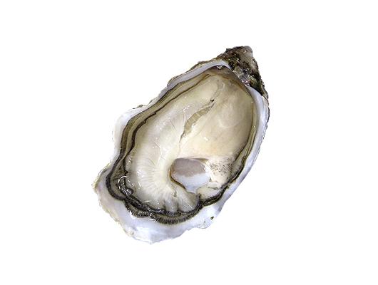 半殼蠔(8-10cm) 12只 (FS051MA)